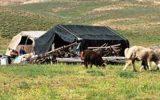خورشید چادر عشایر را روشن کرد/ تولید ۱۱هزار تن گوشت قرمز و ۳۲ هزار تن شیر خام توسط عشایر آذربایجان